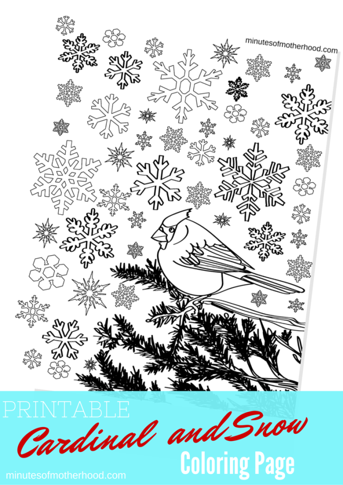 Cardinal In The Snow Free Printable Adult Coloring Page Miniature Masterminds