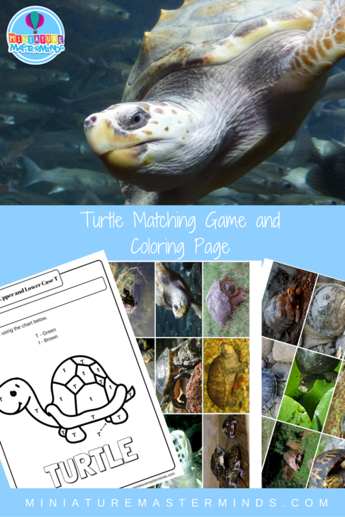Turtle Matching Game And Upper And Lower Case T Coloring Page