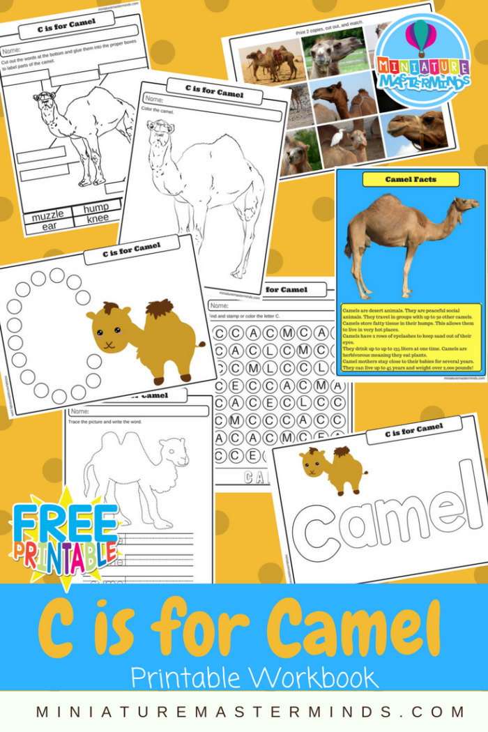 C is For Camel Printable Preschool And Kindergarten Work Pack